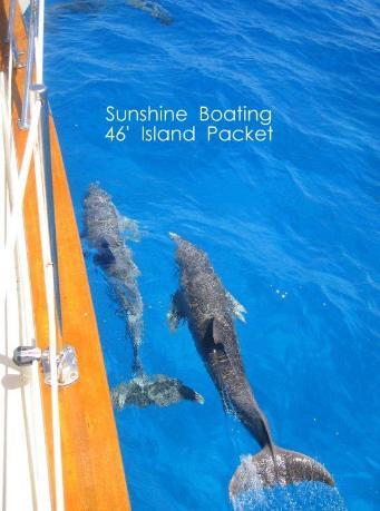 46-IP-dolphins-341x459